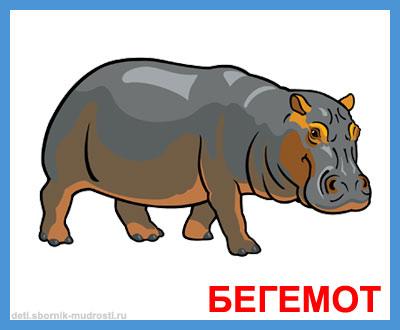 бегемот - дикие животные