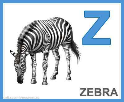 английская буква z