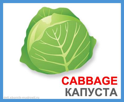 капуста - овощи на английском языке