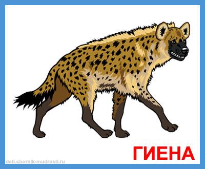 гиена - дикие животные