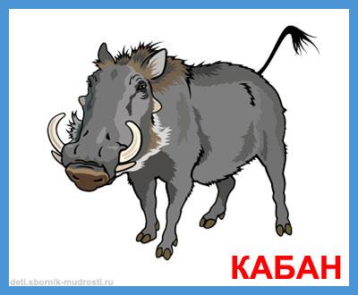 кабан - дикие животные