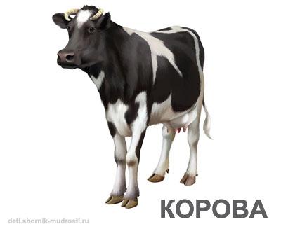 корова - домашние животные