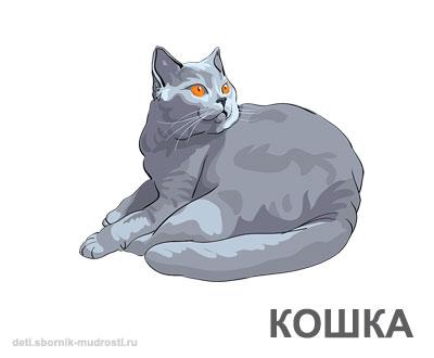 кошка - домашние животные