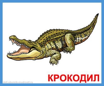 крокодил - дикие животные