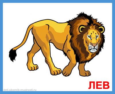 лев - дикие животные