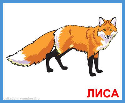 лиса - дикие животные