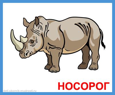 носорог - дикие животные