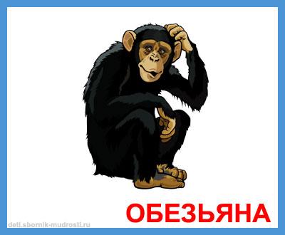 обезьяна - дикие животные
