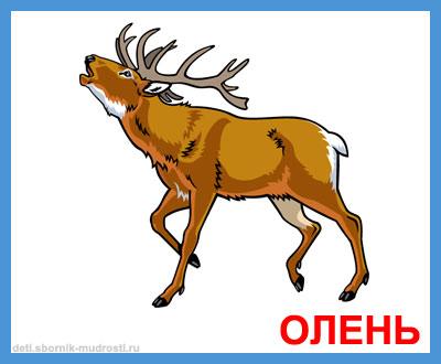 олень - дикие животные