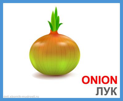 лук - овощи на английском языке