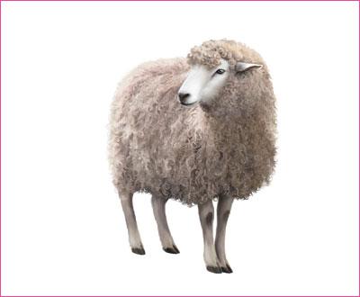 договорка на английском языке про овцу