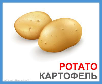 картофель - овощи на английском языке
