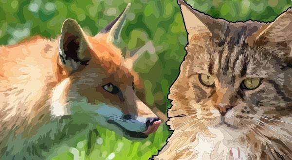 Сказки про кота и лису