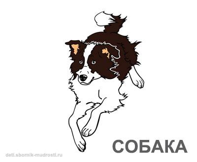 собака - домашние животные