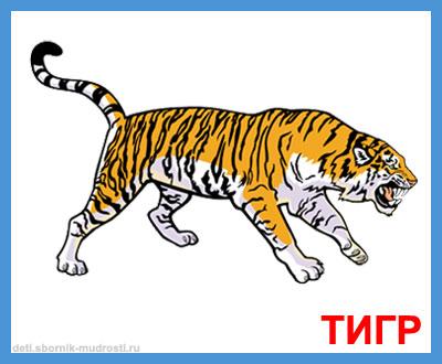 тигр - дикие животные