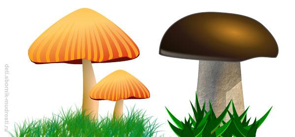 толстая - тонкая ножка гриба