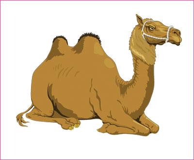 договорка на английском языке про верблюда