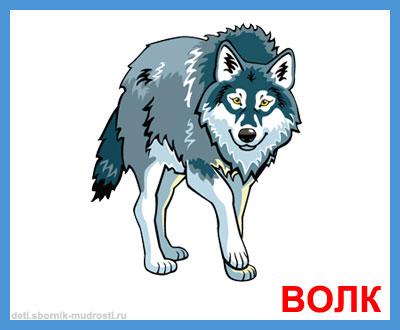 волк - дикие животные