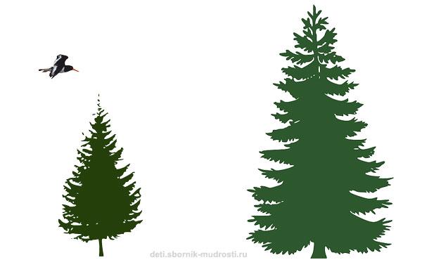 высокое - низкое дерево