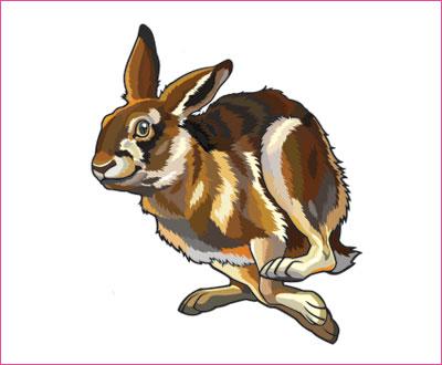 договорка на английском языке про зайца