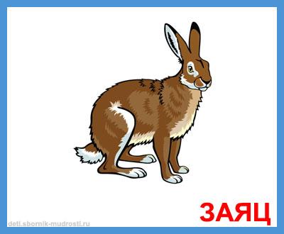 заяц - дикие животные