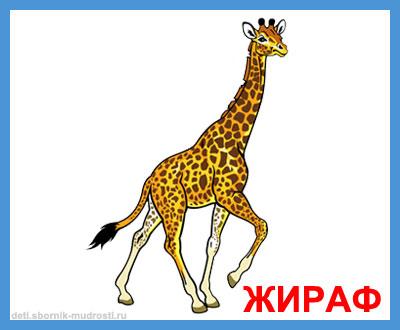 жираф - дикие животные